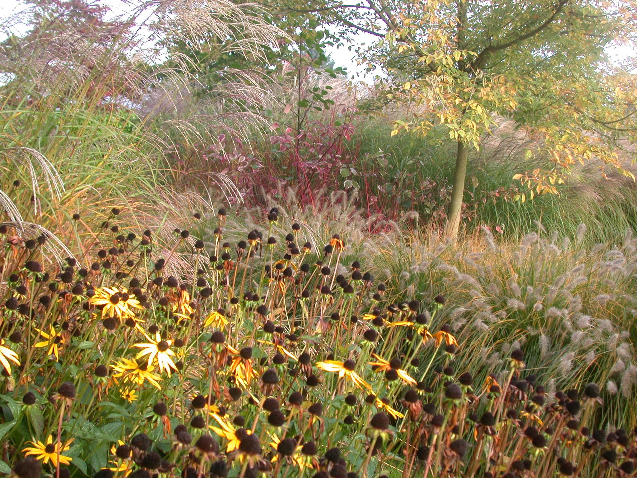 jardin de gramin es art landscape architecte paysagiste architecte de jardin. Black Bedroom Furniture Sets. Home Design Ideas